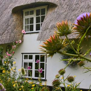Suffolk Thatch Wortham 2